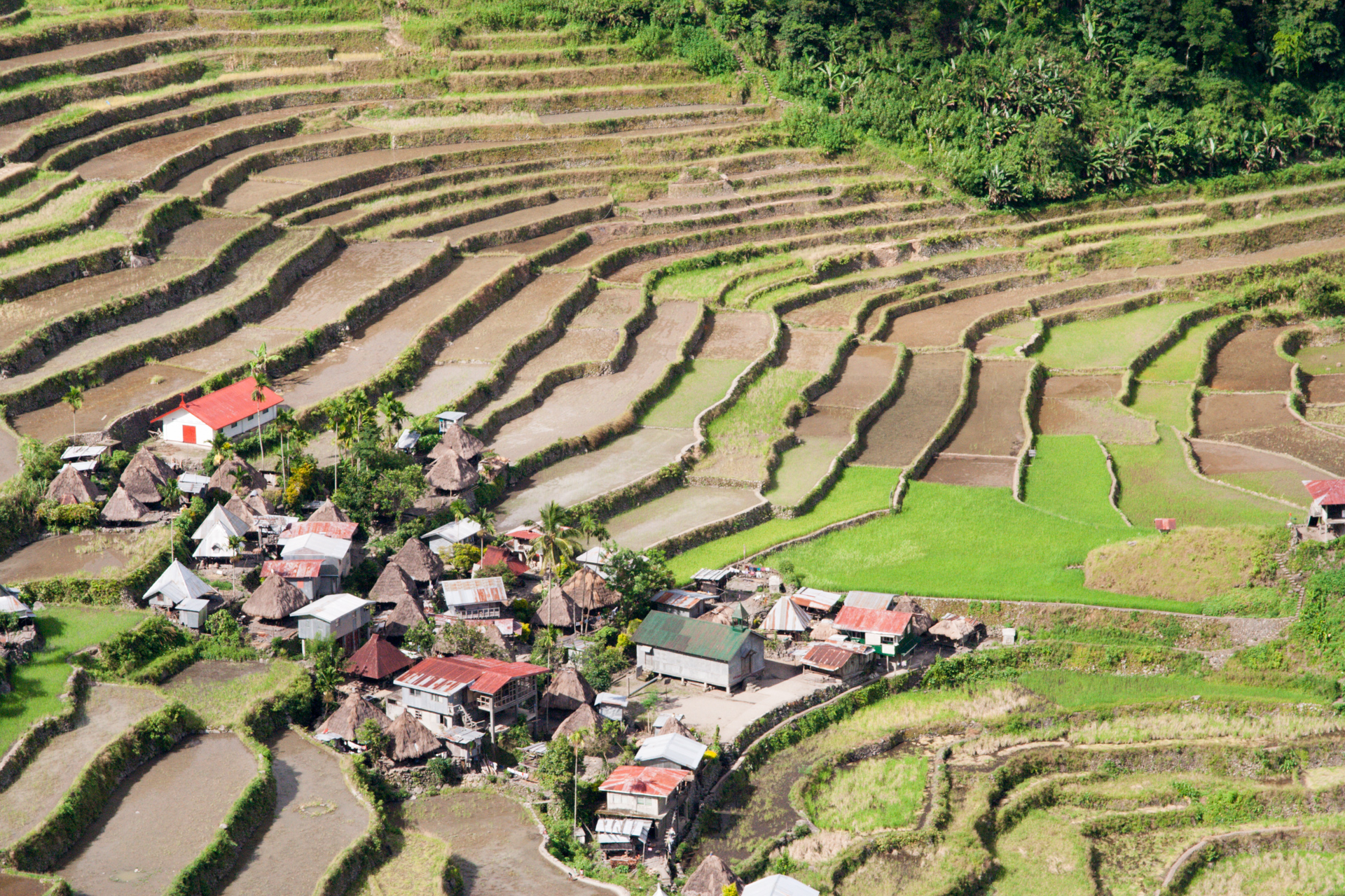 Batad Ifugao (Photo by Jasper Espejo)